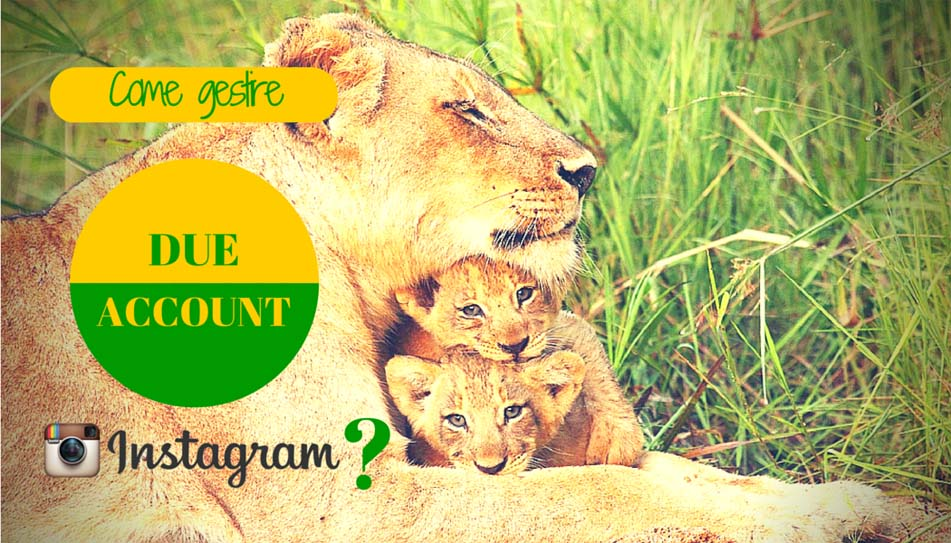 Come gestire 2 account Instagram - SocialWebMax